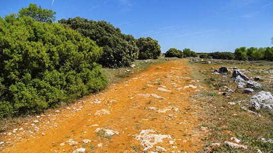De ruta por la cañada de Las Merinas en Prádena